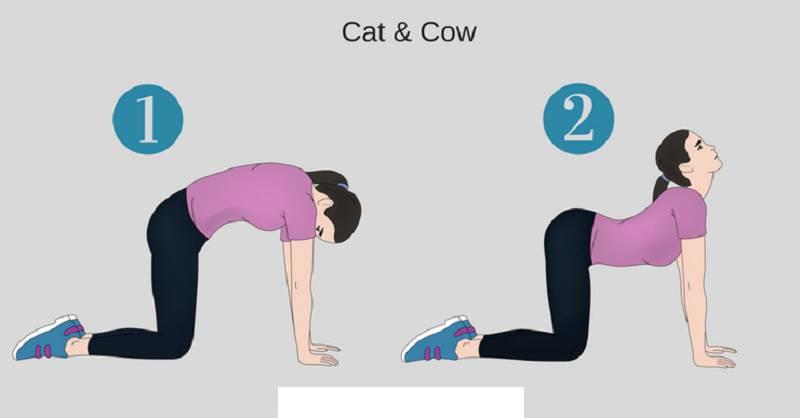 حرکت گربه گاو