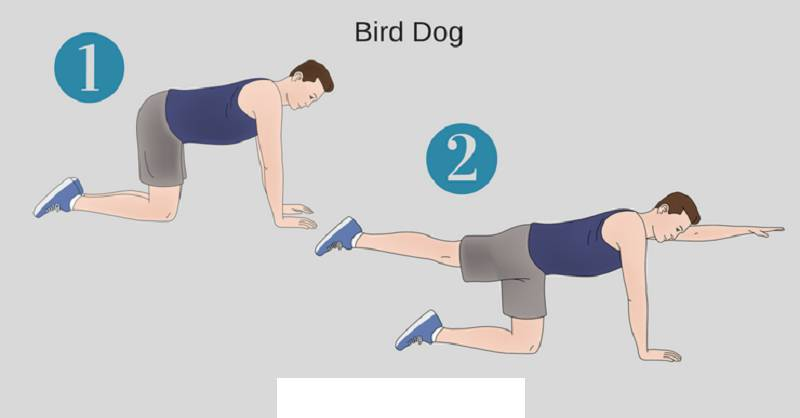 حرکت bird dog